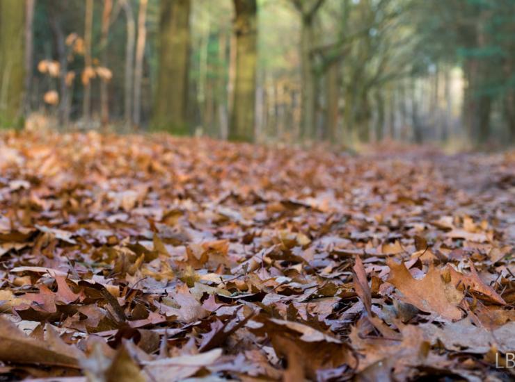 Flow : Blanket of leaves