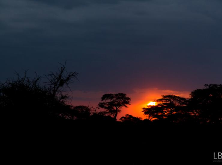 Flow : Sunset - Serengeti NP